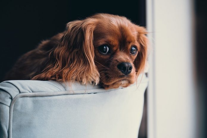 Pode ou não ter animal em condomínio?